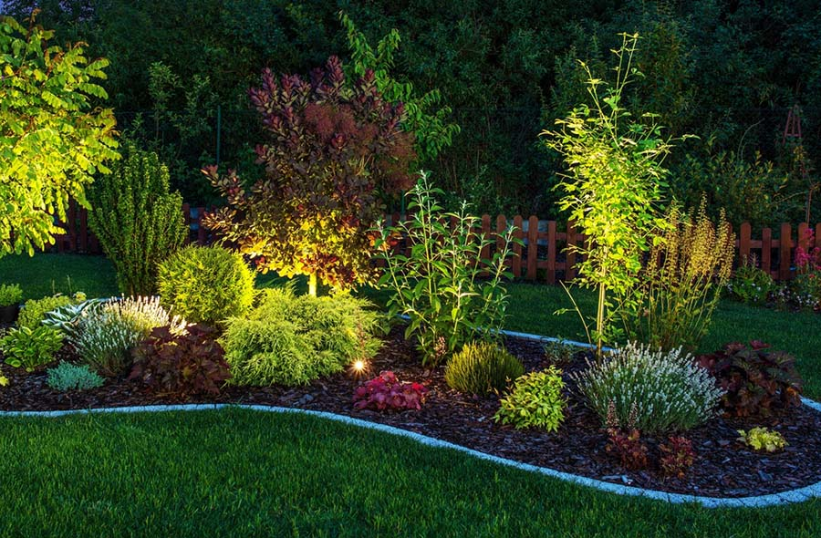LED lights set up in landscaping in the backyard